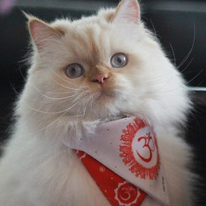 Bandana Mascota S Ohm rojo Cloo