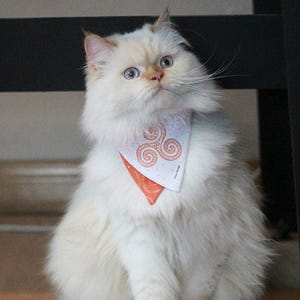 Bandana Mascota S Trisquel naranjo Cloo